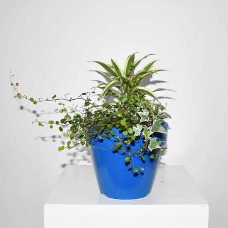 【ORDER】Green  Garden Pot