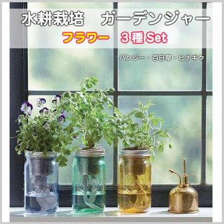 水耕栽培 フラワー ガーデンジャー 花 パンジー 百日草 雛菊 3本セット 先行販売 プレゼント 簡単 HB