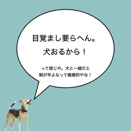 """カーマグネット """"Alarm Clock""""【送料無料】"""