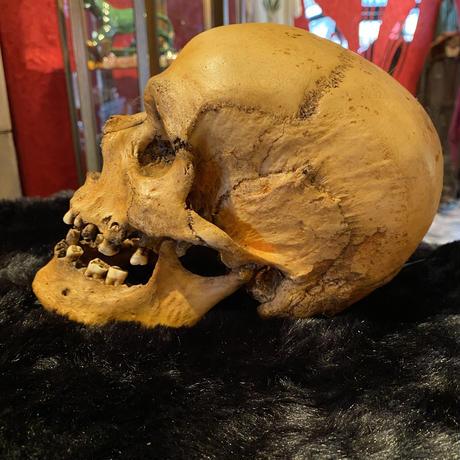 Realistic Male Skull Lamp