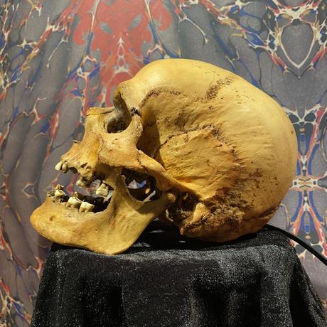 Realistic Male Skull Lamp《Type1》