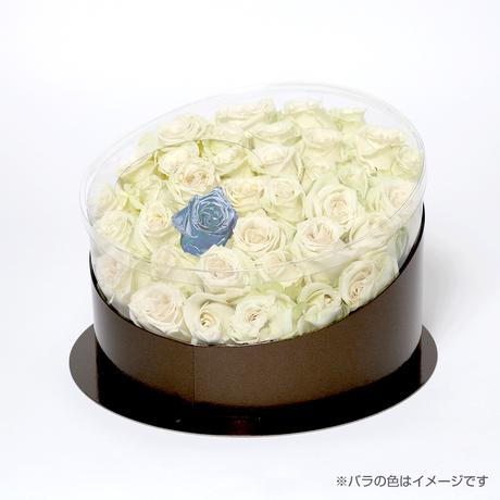 En(white-アクアマリン-Mar. 3月)
