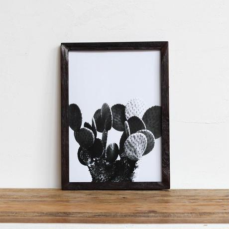 """""""うちわサボテン"""" 「モノクロアート 観葉植物」A4 モノトーン ポスター & 木製 アンティーク 額縁 セット"""