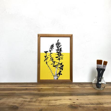 観峰玉「植物xカラー」  A4 ポスター & 古材 ポスターフレーム 壁掛け