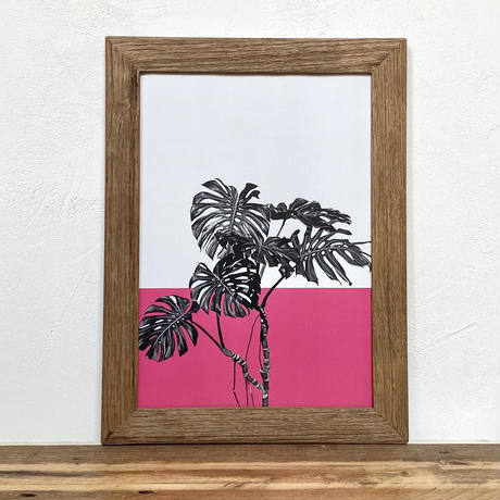 モンステラ・デリシオーサ「植物 カラー」  A4 ポスター & 古材 ポスターフレーム 壁掛け