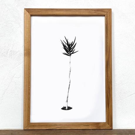 「モノクロアート Aloe」A4 モノトーン ポスター & 木製 アンティーク 額縁 セット