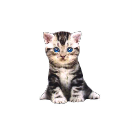 PAUL & JOE /  BLUE EYE CAT– Nounette / PJ7027-S03B1 / 2021.9月の新作