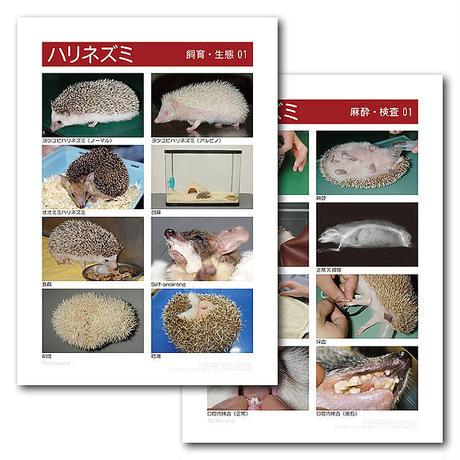 インフォームドコンセントシート:ハリネズミ:飼育・生態・麻酔・検査01