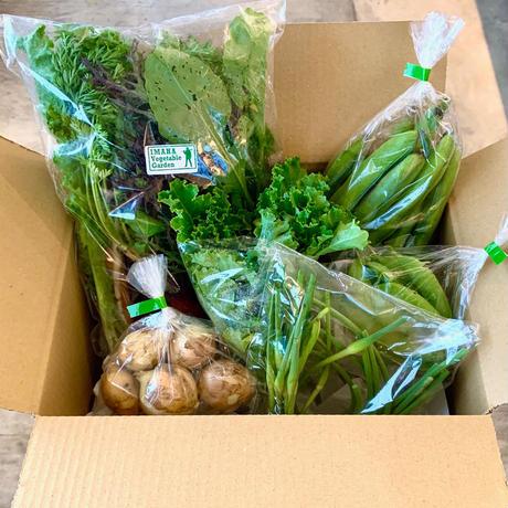 イマハ菜園 採れたて有機野菜BOX(全国配送)