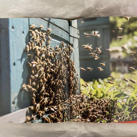 芥川仁『羽音に聴く 蜜蜂の人間の物語』
