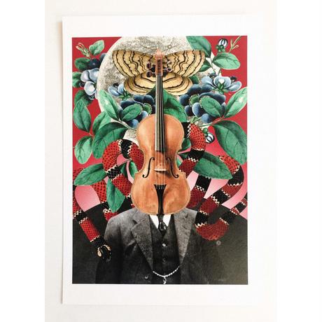 ポストカード 「訳ありのヴァイオリン」