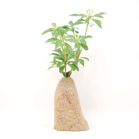 Real Stone Vase 1248