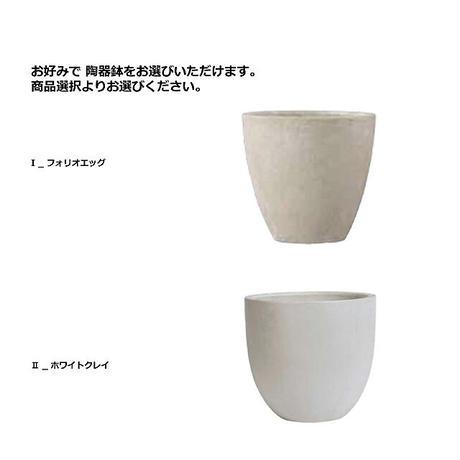 【EZ BARRIER GREEN 365】抗菌人工樹木 ユッカ H145㎝(陶器鉢付)