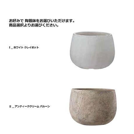 【EZ BARRIER GREEN 365】抗菌人工樹木 アラリア H120㎝(陶器鉢付)
