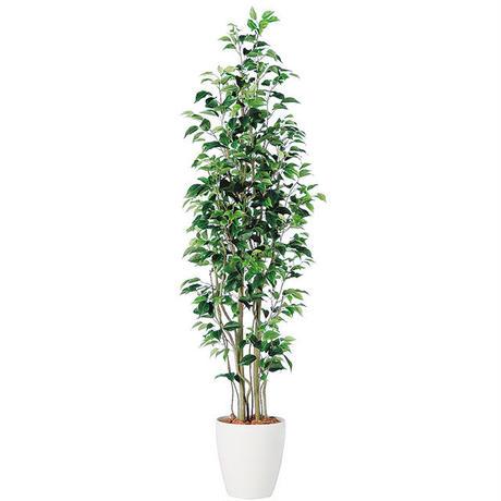 【EZ BARRIER GREEN 365】抗菌人工樹木 ベンジャミン H180㎝