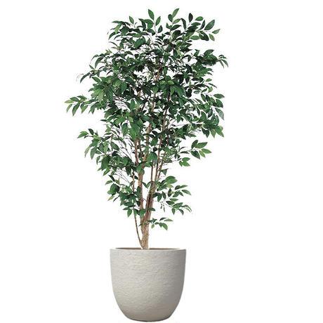 【EZ BARRIER GREEN 365】抗菌人工樹木 ファイカス H215㎝(陶器鉢付)