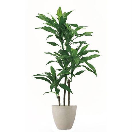 【EZ BARRIER GREEN 365】抗菌人工樹木 ドラセナ H130㎝(陶器鉢付)