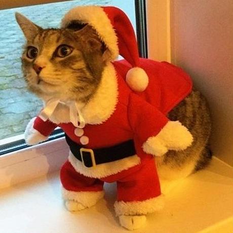IDEPET クリスマスの猫の服 冬のペットの服 猫の衣装 暖かい猫のコート サンタクロース ペットアパレル
