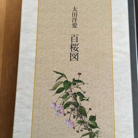 百桜図(SAKURA BOTANICAL ART) 太田洋愛(絵)