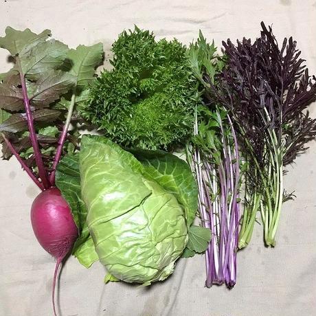 ピクルス1個とおまかせ野菜(S)のセット