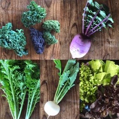 野菜マフィンとサラダ野菜のセット