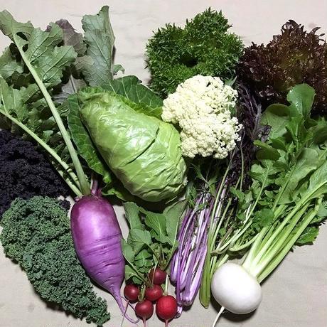 旬の野菜セット M