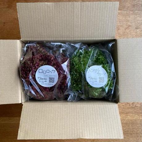 季節の野菜の詰め合わせ