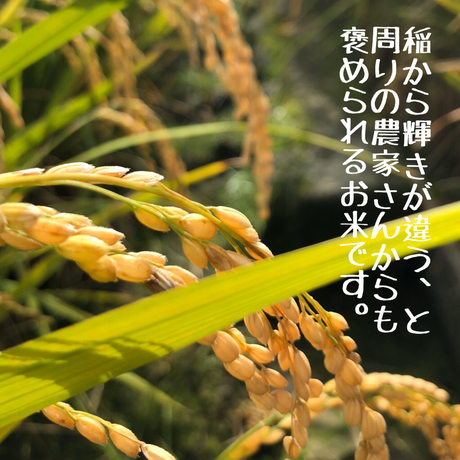 【2020年米 玄米3分づき5キロ】山の恵みたっぷりの湧水米