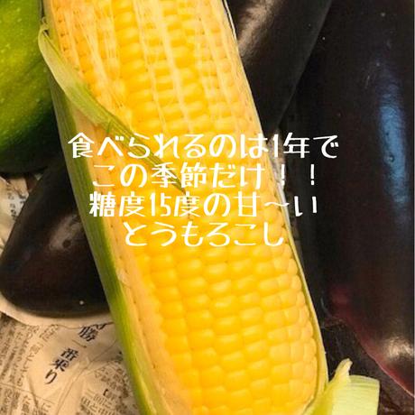 【7月10日収穫予定!あまーーい!とうもろこし】と湧水米のお得なセット