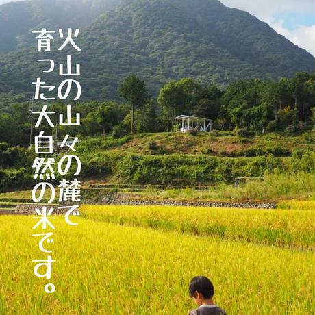 雲仙島原  山の麓の湧き水米(10キロ)