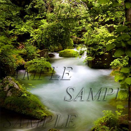 奥入瀬渓流4 size:L