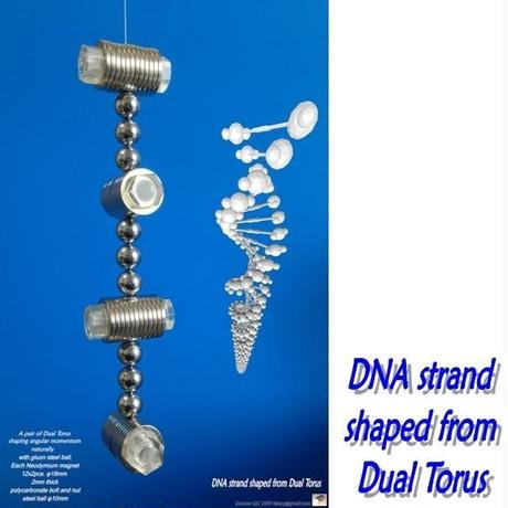 Picture for print   DNA strand shaped from Dual Torus Tabloid length
