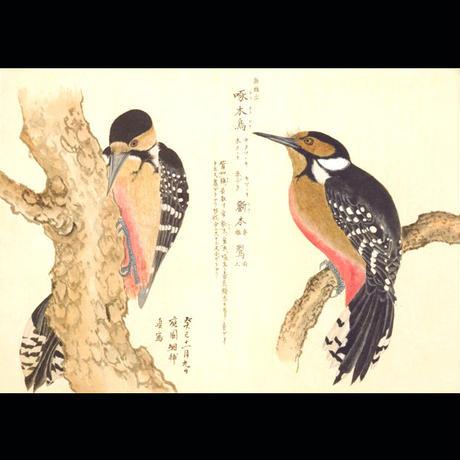 美し、をかし、和名由来の江戸鳥図鑑