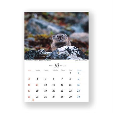 氷河期の生き残り ナキウサギカレンダー 2021
