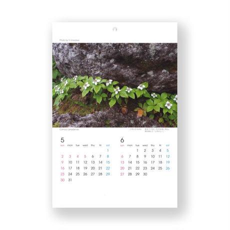 梅沢俊カレンダー 北国の花