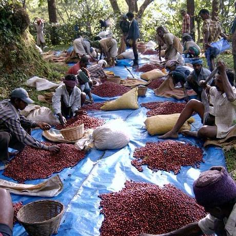 インドバルマアディ農園 バイオダイナミック ナチュラル ドリップコーヒー10個入り