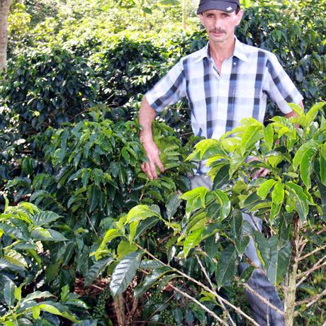 コロンビア ボナンザ農園 トロピカルスイート ナチュラル 500g