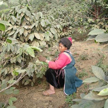 タイ王国 ウサミ農園 ドイチャン 200g