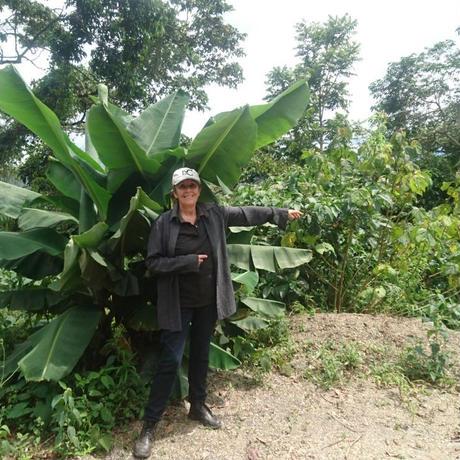 コロンビア ボナンザ農園 トロピカルスイート ナチュラル ドリップコーヒー10個入り