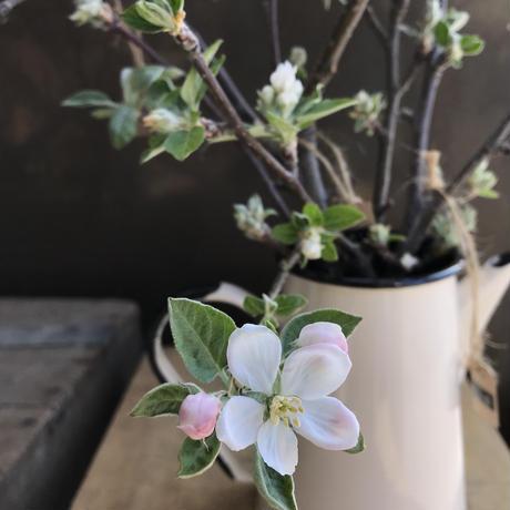 無添加りんごジュース 180ml×6本〈りんごの枝(花) 付 〉