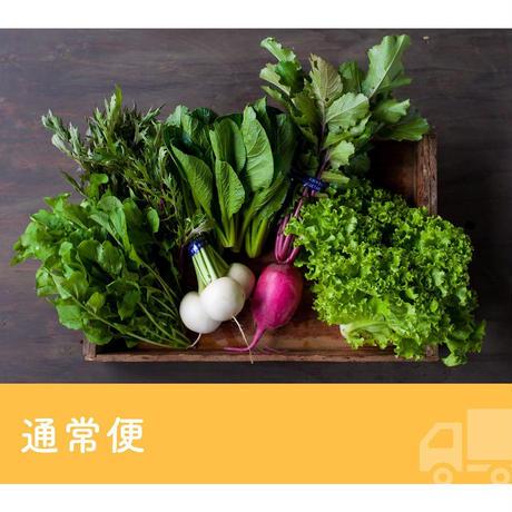 【定期便】FIO野菜 Mセット(ファミリー向け標準セット)