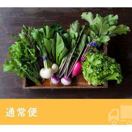 【定期便】FIO野菜 Lサイズ(ファミリー向け 大きめセット)