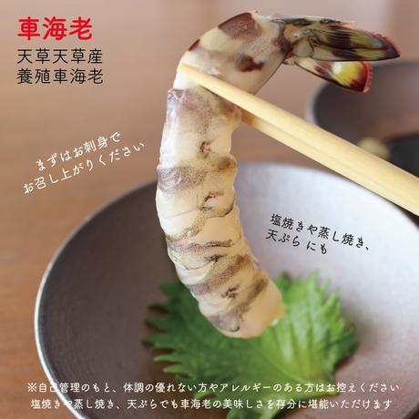 【送料無料】熊本・天草産活のイイ、甘い車海老1kg(約40匹)