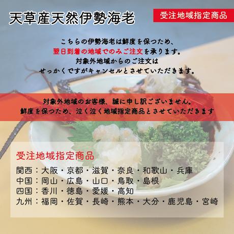 【新入荷】受注地域指定!天然プリプリの天草産伊勢海老!2尾(合計1,000g)