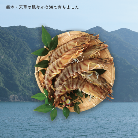 【送料無料 12/30到着】天草産活のイイ、甘い車海老500g(約20匹)