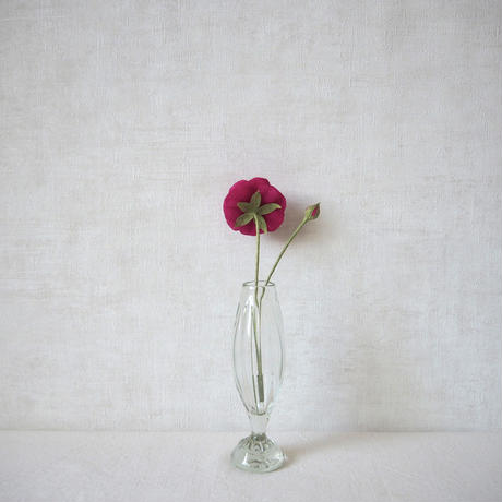 Ranunculus(Raspberry)