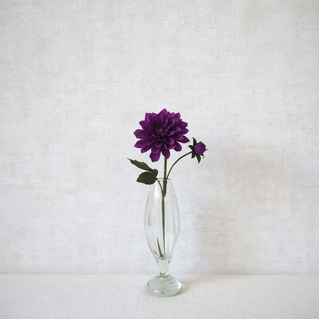 Dahlia(Royal Purple)