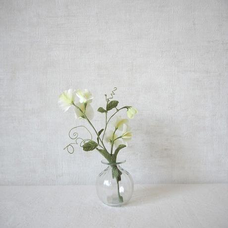 Sweet Pea(White)