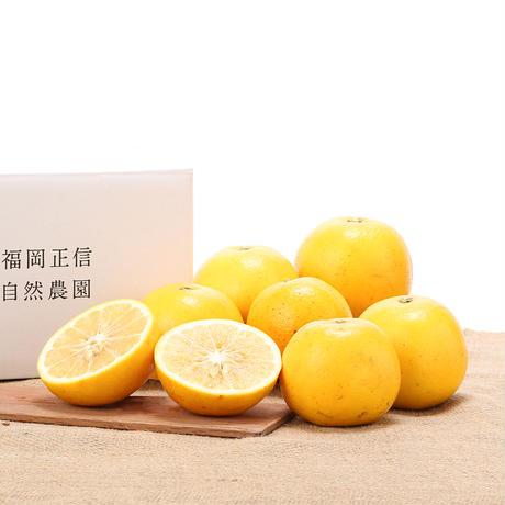【450-121】グレープフルーツ(マーシュ)(2kg)
