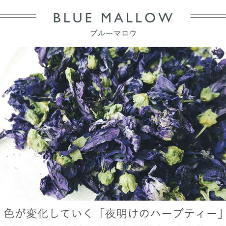 FT040308M / Tシャツ  FEMALE -  blue mallow  -